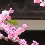 ケーザイ小話(自転車ネタ皆無)
