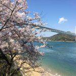 お花見サイクリング(向島・因島)